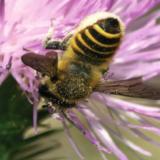 abeilles.png