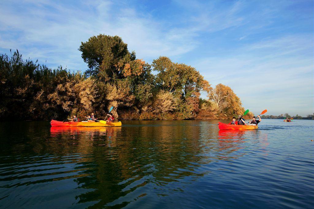 France, Bouches du Rhone (13), parc naturel regional de Camargue, descente du petit Rhone en kayak entre Albaron et Sylvereal