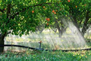 France, Drome (26), La Roche de Glun, irrigation des abricotiers